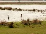 Enten auf Werder