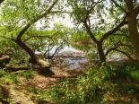 Unberührte Naturvauf der Halbinsel Gnitz