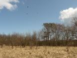 Kormorankolonie im Naturschutzgebiet