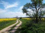 Wanderweg im Hinterland von Usedom